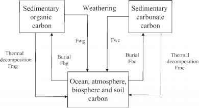 Diagram The Carbon Cycle