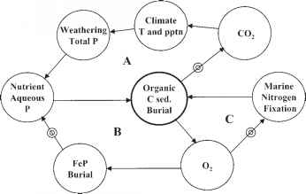 Feedback Short Term Organic Carbon Cycle