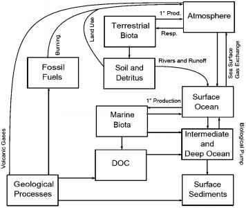 Ocean biotic feedbacks with centennial climate change the carbon cycle figure 1 schematic diagram of the major reservoirs and flux directions of the global carbon cycle ccuart Choice Image