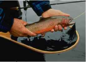Trout Affected Global Warming