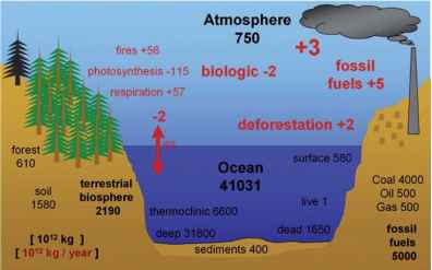 Carbon Reservoirs Earth