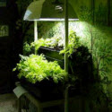 Getting Started In Hydroponics: Expert Tips, Plans & Secrets