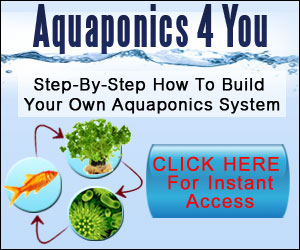 Aquaponics Projects For Beginners