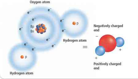 Covalent Bond Examples