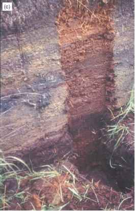 Peat Stratigraphy