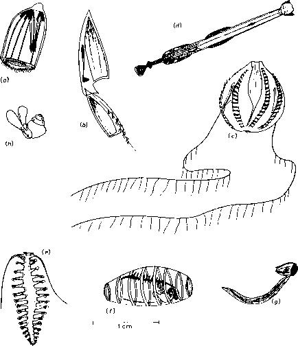 Zooplankton Drawing