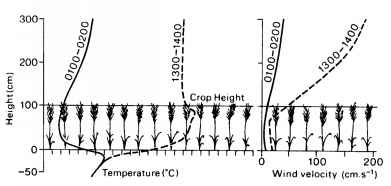 Crop Height And Transpiration